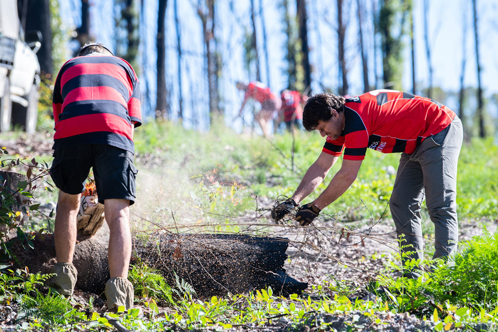 Andrew Fleming (right) and Boars teammates clear fire-damaged fencing near Mogo. Photo: Rugby AU Media/Stuart Walmsley